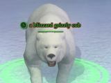 A blizzard grizzly cub
