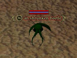 An shrunken beetle