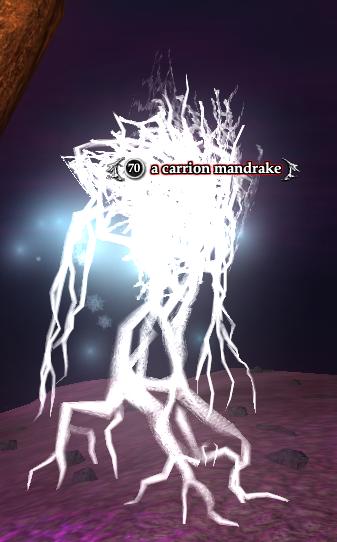 A carrion mandrake