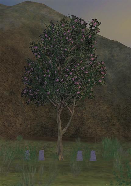 The Fellowship Tree