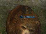 A wilderbear