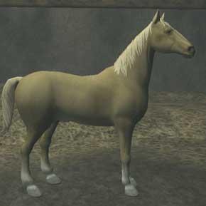 Race horse.jpg