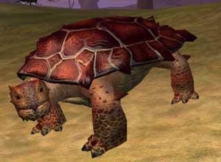Race turtle.jpg