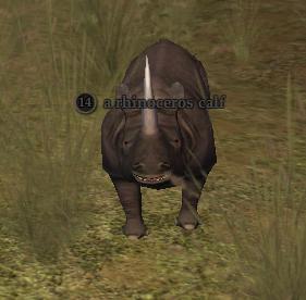 A rhinoceros calf
