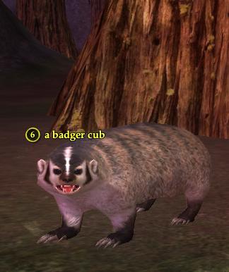 A badger cub.png