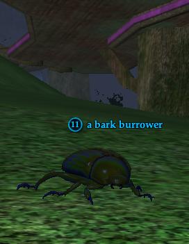 A bark burrower