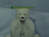 A lounging blizzard grizzly