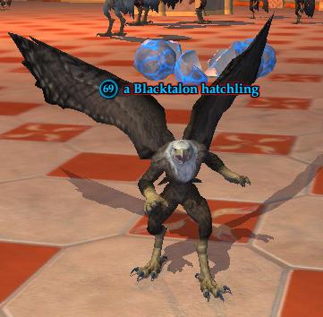 A Blacktalon hatchling.png