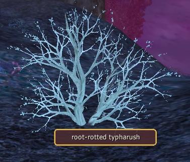 Arid Roots
