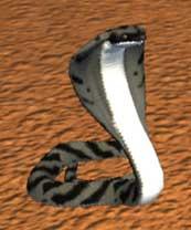 Race cobra.jpg