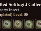 Spotted Solifugid Collection
