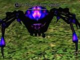A blue widow spider (Antonica)