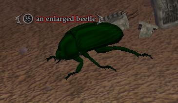 An enlarged beetle