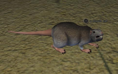 A scrub rat