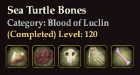 Sea Turtle Bones
