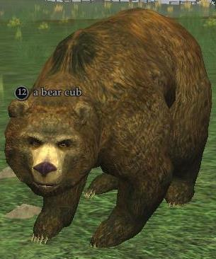 A bear cub (Antonica)