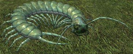 Race centipede.jpg