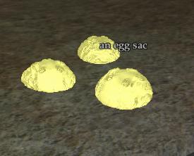 An egg sac