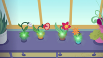Potted flowers glowing with magic EGDS8