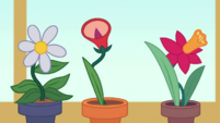 Potted flowers start singing Room to Grow EGDS8