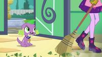 Twilight Sparkle sweeping leaves off the floor EGDS8