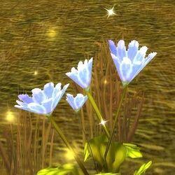 Flor de paz