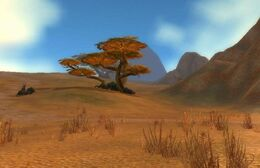 Barrens at Day.jpg