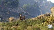 Fauna PS4