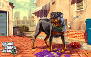 Grand Theft Auto V Artwork - Chop
