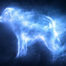Jack Russell Terrier Patronus.jpg