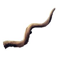 Cuerno de bicornio