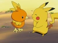 EP277 Torchic y Pikachu