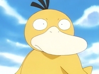 EP036 Psyduck (2).png