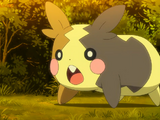 Morpeko (anime)