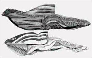 Bio-naves Kraken Doomripper Hellblaster.jpg