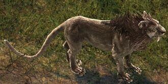 Elder-Lion.jpg