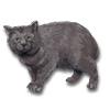 Poe2 pet backer cat Bubble icon.png