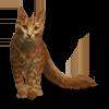 Poe2 pet backer cat Kathrynn icon.png