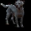 Poe2 pet backer dog Atlas icon.png