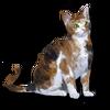 Poe2 pet backer cat Bernhard icon.png