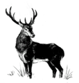 Bestiary stag.png