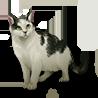 Pet black white cat icon.png
