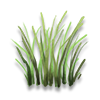 Poe2 river reed icon.png