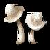 Snowcap icon.png