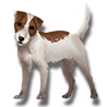 Pet terrier icon.png