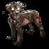 Grave Hound Pup