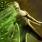 Disintegration icon.png