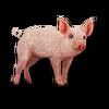 Poe2 pet backer pig Bark String icon.png