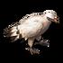 Beakhead