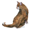 Pet archives staff icon.png